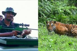 Тигр убил 15 человек в Индии, его ищут