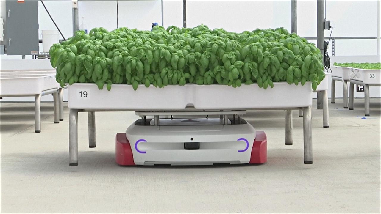 Как роботы ухаживают за грядками в Калифорнии