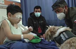 Лохматый десант: собаки-терапевты помогают врачам и пациентам в Чили