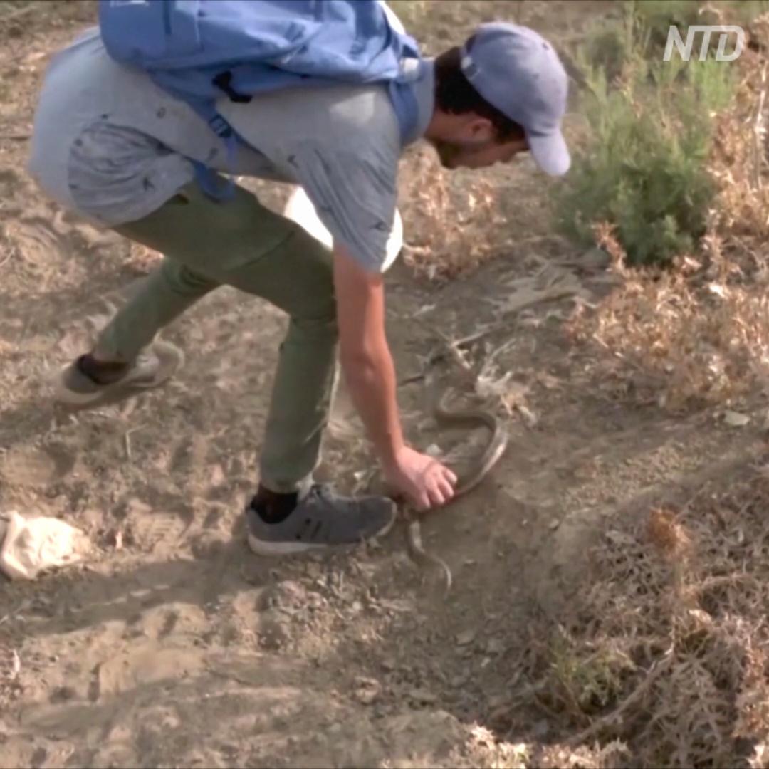 Как ютубер ловит змей и скорпионов