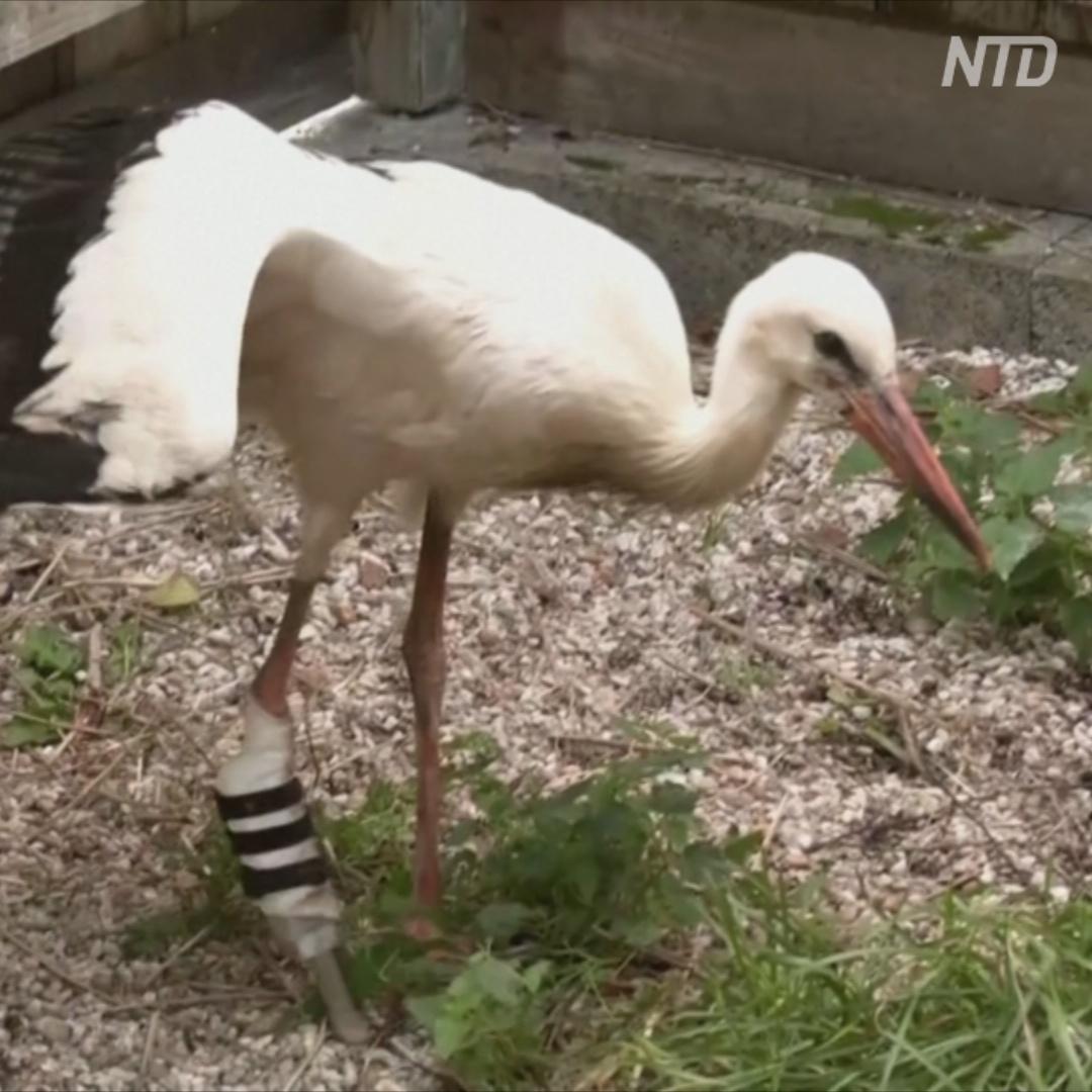 Школьник помог птице снова ходить