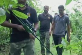 На тигра-убийцу в Индии объявлена охота
