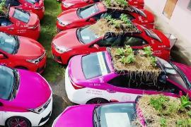 Грядки на колёсах: баклажаны и кабачки на крышах такси