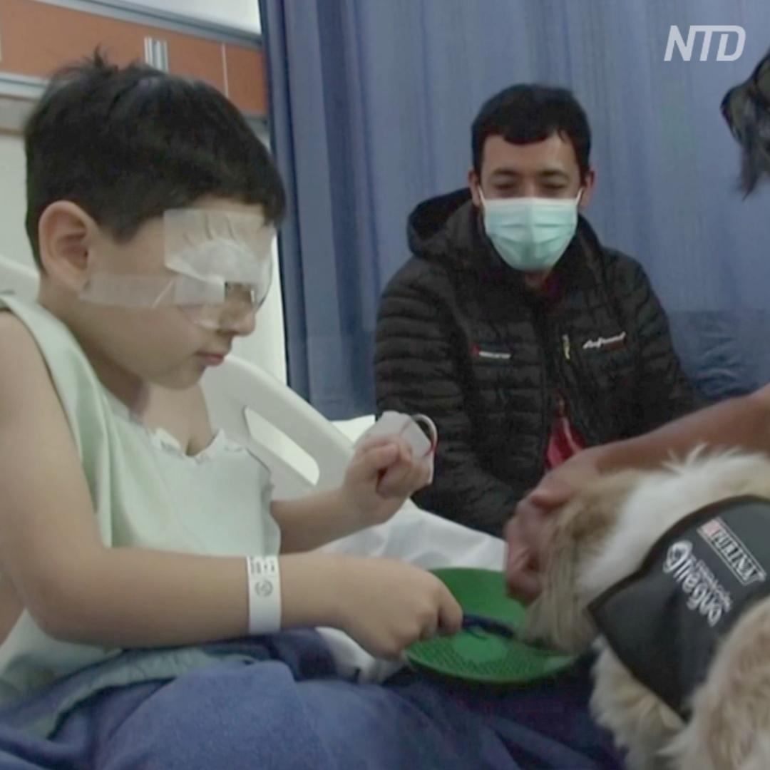 Собаки-терапевты помогают врачам и пациентам в больнице Чили