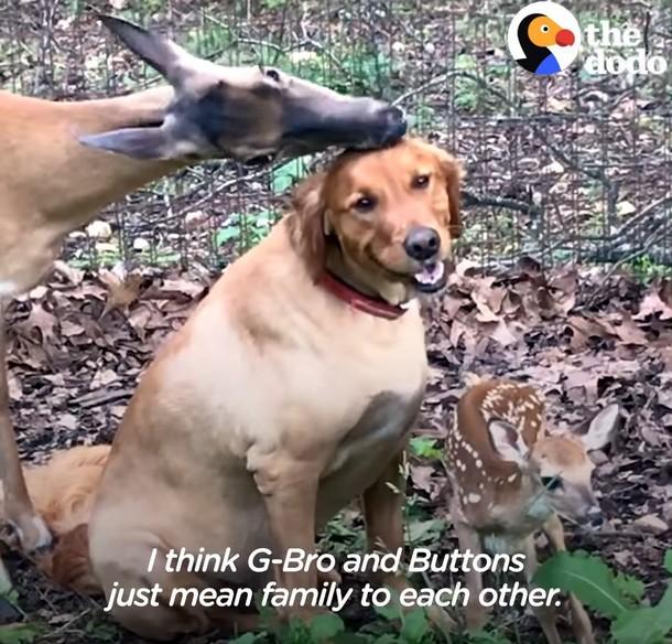 ch - Олень и собака дружат более 10 лет