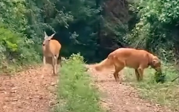 gg 1 - Олень и собака дружат более 10 лет