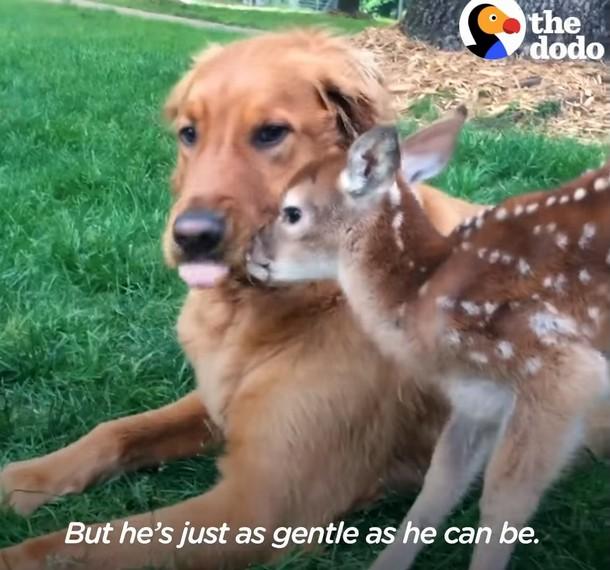 n - Олень и собака дружат более 10 лет
