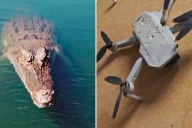 Дрон снял, как его утопил прыгучий крокодил