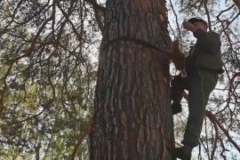 Башкирец добывает мёд диких пчёл, залезая на деревья