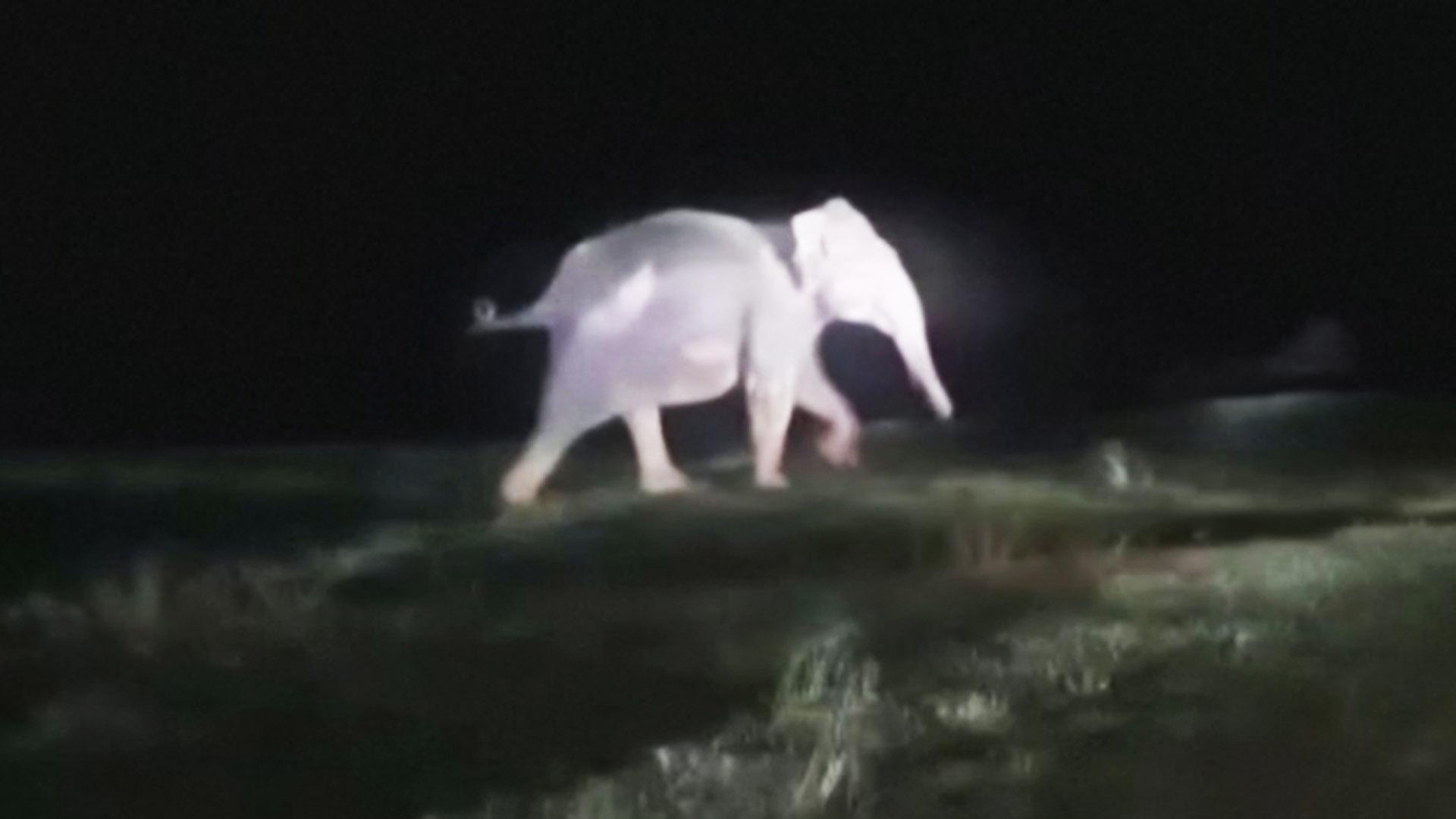 Откопали экскаватором: как в Индии спасали слонёнка