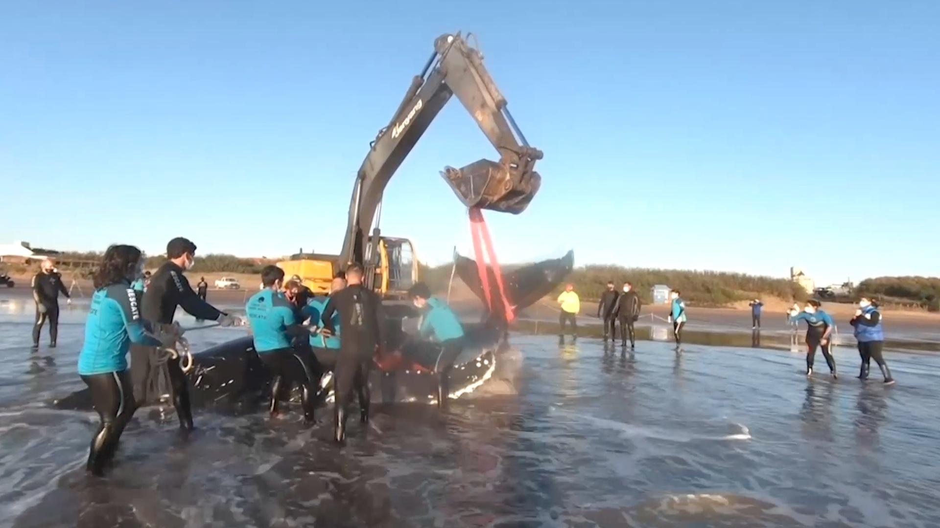 Двух китов, выбросившихся на берег, спасли в Аргентине