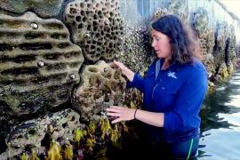 «Живые морские стены» возвращают биоразнообразие в гавань Сиднея