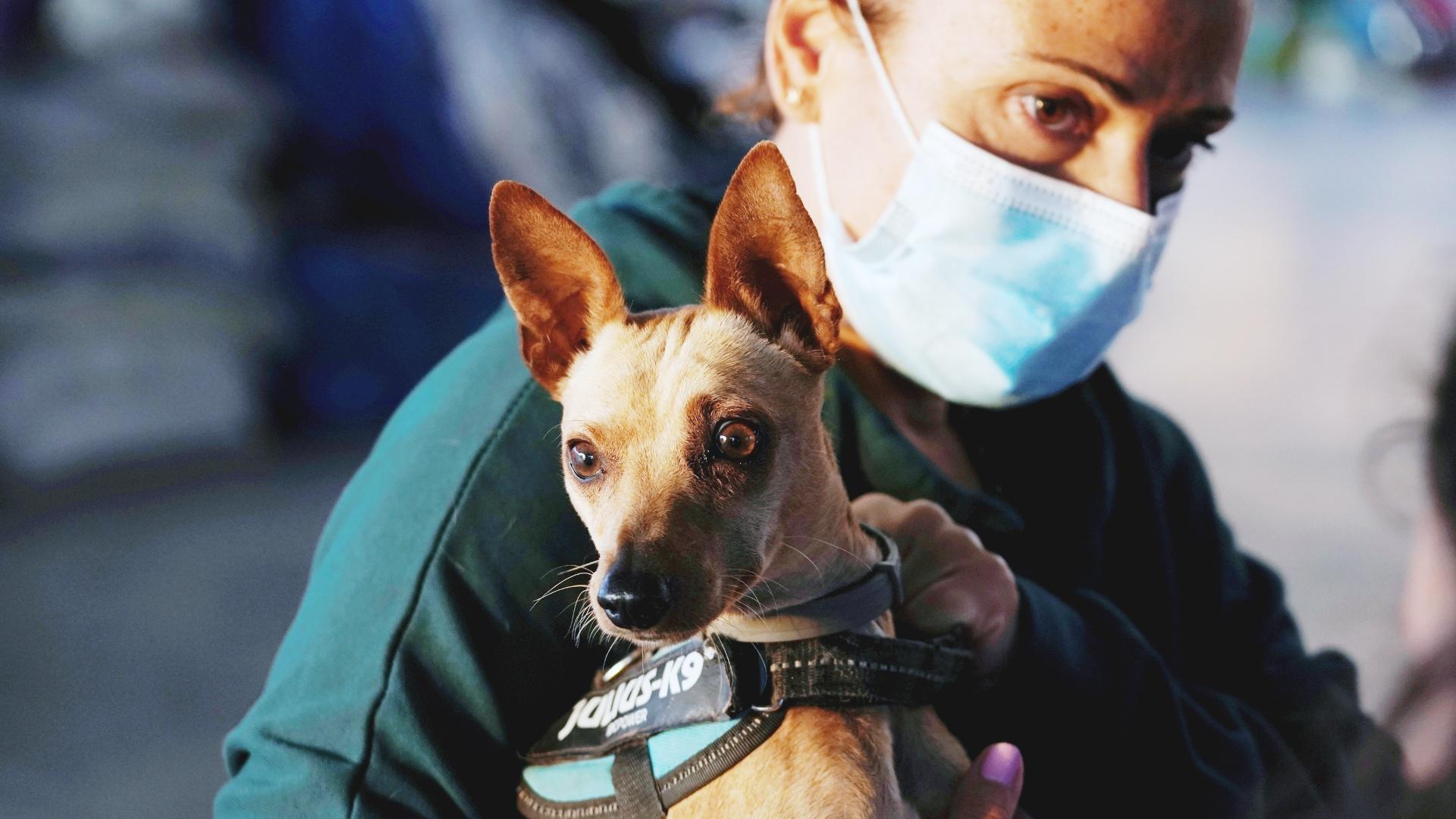 Собаки, кошки и куры: временный приют на острове Пальма спасает животных