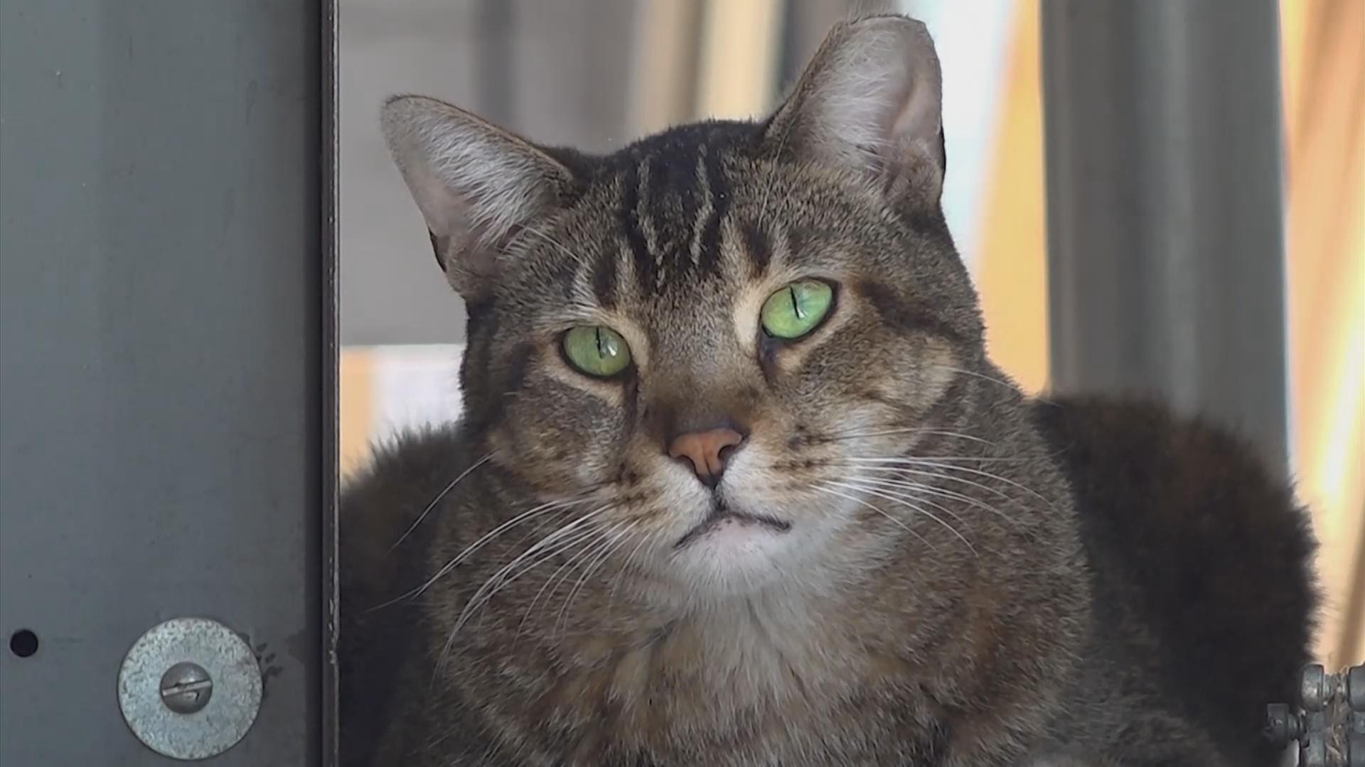 В Чикаго кошек нанимают на работу, чтобы избавиться от крыс