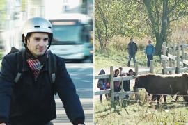 Коровы, насекомые и велосипедисты: как Таллин стал зелёной столицей