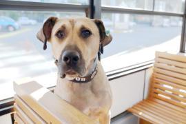 Бродячая собака стала звездой Стамбула, путешествуя в метро и трамваях