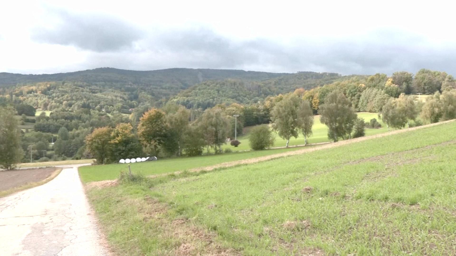 Пропавшую 8-летнюю немку нашли в чешском лесу
