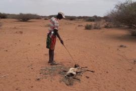 Засуха в Кении: миллионам грозит голод