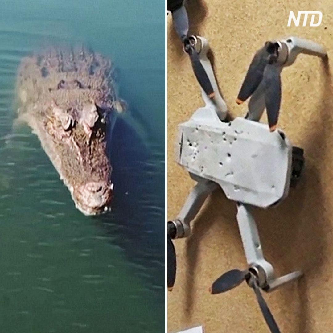 Как прыгучий крокодил дрон летевший утопил