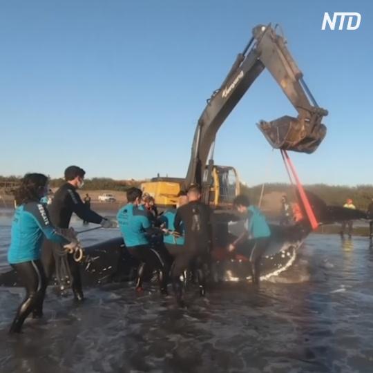 Как спасали двух китов в Аргентине