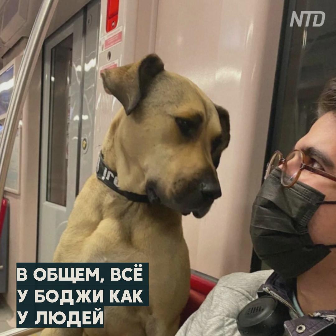 Звезда Стамбула: зачем бездомный пёс катается в метро