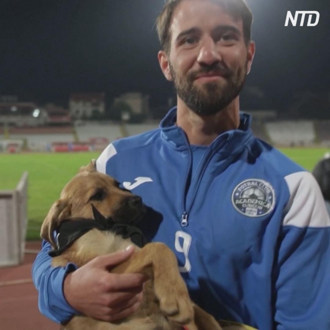 Румынские футболисты помогают бездомным щенкам
