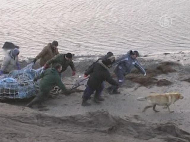 11-летний мальчик нашел останки мамонта на Таймыре
