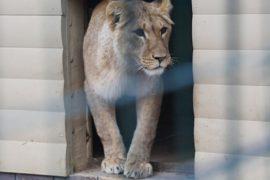 «Черный рынок» редких животных уходит в Интернет