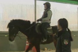 Лошади помогают лечить интернет-зависимость