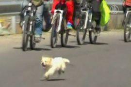 Бездомный пёс бежал за велосипедистами 3 недели