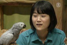 Попугай из Южной Кореи издает более 50 звуков