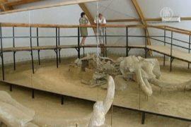 Скелеты мамонтов нашли в угольном карьере