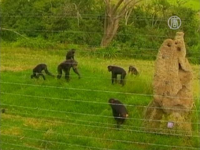 В заповеднике в ЮАР обезьяны покалечили студента