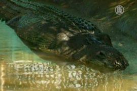 Шестиметровый крокодил попал в Книгу Гиннесса