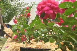 Фестиваль садов порадовал москвичей