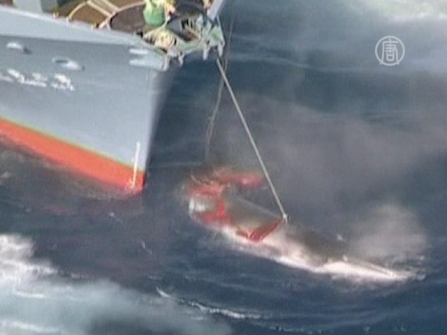 Сеул хочет убивать китов, несмотря на мораторий