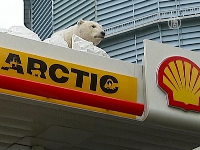 «Гринпис» и белый медведь призывают спасти Арктику