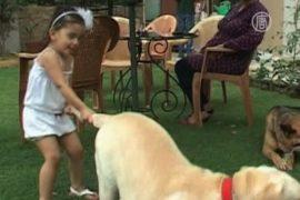 Избалованных собак в Индии всё больше