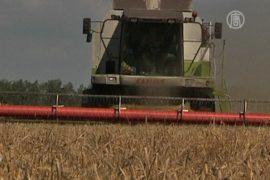 Зерновых в России соберут в два раза меньше