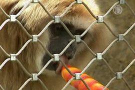 Душ, лёд, мороженое: животных спасают от жары