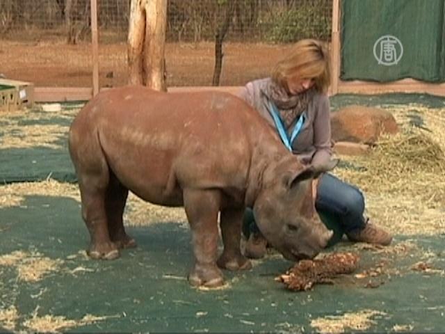 Приют для сирот-носорогов открылся в ЮАР