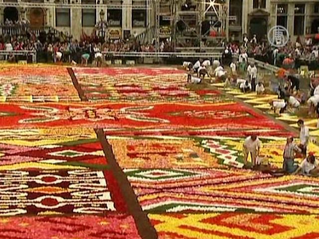 700 тысяч цветков укрыли площадь в Брюсселе