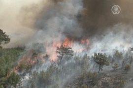 Пожар уничтожает уникальное растение Хиоса