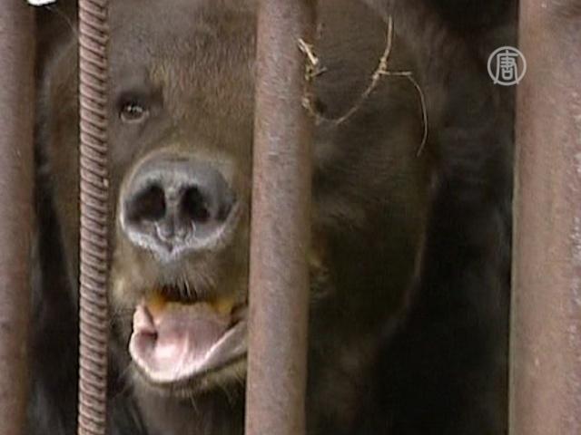 Можно ли содержать медведя на зарплату биолога?