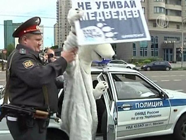Медведей «Гринпис» арестовали у здания «Газпрома»