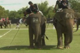 Поло на слонах — особый турнир в Таиланде