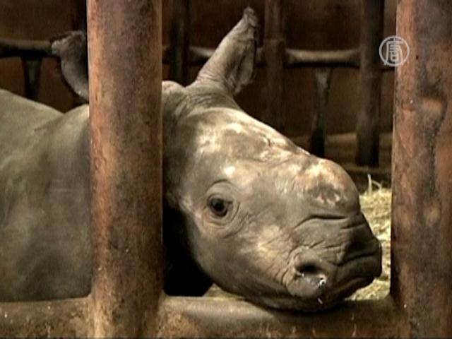 Носороги досрочно порадовали зоопарк потомством