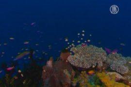 Кораллы будут спасать истреблением морской звезды