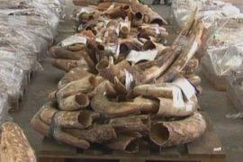 Огромная партия слоновой кости изъята в Гонконге