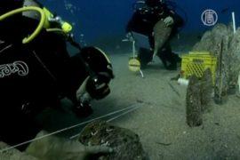 Редких моллюсков спасают из-под «Коста Конкордии»